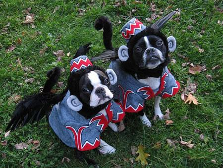 Wizard of Oz Flying Monkeys Dog Costume : wizard of oz dog costume  - Germanpascual.Com
